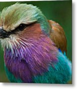 Rainbow Bird Metal Print