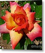 Rainbow Sorbet Rose Metal Print by Denise Mazzocco