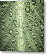 Raindrops On Green Leaf Metal Print by Elena Elisseeva