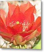 Red Cactus Flower Metal Print