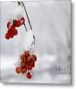 Red Fruit With Snow Metal Print
