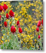 Red On Yellow Metal Print