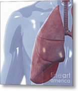 Respiratory System Metal Print