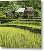 Rice Fields In Bali Indonesia Metal Print