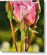 Rose Flower Metal Print
