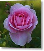 Rose Of Spring Metal Print
