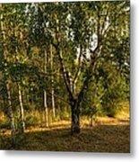 Russian Landscape Metal Print
