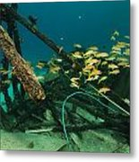 Safari Boat Wreckage And Aquatic Life In The Red Sea. Metal Print