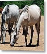 Salt River Wild Horses Metal Print