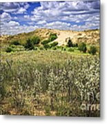 Sand Dunes In Manitoba Metal Print by Elena Elisseeva