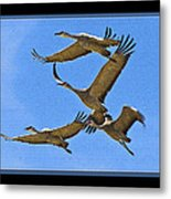 Sandhill Cranes In Flight Metal Print