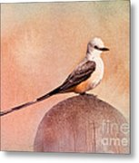 Scissor-tailed Flycatcher Metal Print
