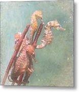 Sea Horses Metal Print by Angie Vogel