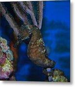 Seahorse And Coral Metal Print