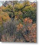 Sedona Fall Color Metal Print