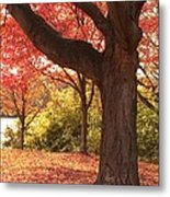Shading Autumn Metal Print