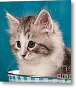 Sibirian Cat Kitten Metal Print by Doreen Zorn