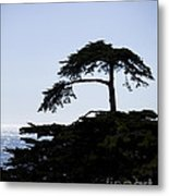 Silhouette Of Monterey Cypress Tree Metal Print