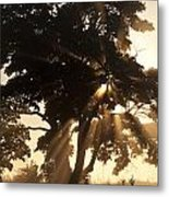 Silhouetted Tree With Sun Rays Metal Print