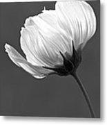 Simply Beautiful In Black And White Metal Print