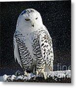 Snowy Owl On A Twilight Winter Night Metal Print