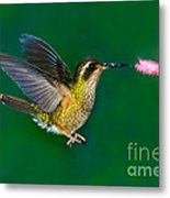 Speckled Hummingbird Metal Print
