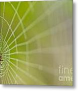 Spider Web With Dew Drops With Spider On Web Metal Print