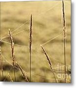 Spider Webs In Field On Tall Grass Metal Print