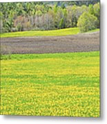 Spring Farm Landscape With Dandelion Bloom In Maine Metal Print by Keith Webber Jr