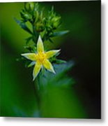 Starflower Metal Print