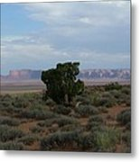 Still Life In The Desert Metal Print
