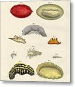 Strange Molluscs Metal Print