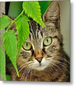 Stray Cat Portarit Metal Print