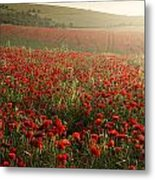 Stunning Poppy Field Landscape Under Summer Sunset Sky Metal Print