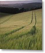 Summer Landscape Image Of Wheat Field At Sunset With Beautiful L Metal Print