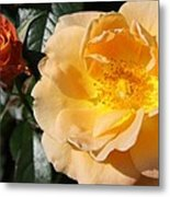 Summer's  Rose Love Metal Print