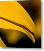 Sunflower Petals Metal Print