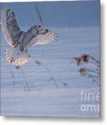 Sunlit Wings Metal Print