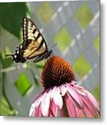 Tiger Swallowtail On Coneflower Metal Print