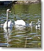 Swan With Signets Metal Print