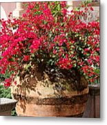Terracotta Pot Metal Print