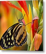 The Postman Butterfly Metal Print