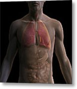 The Respiratory And Digestive Systems Metal Print
