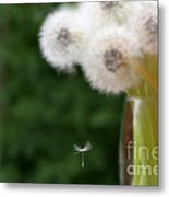 The Seed Metal Print by Brenda Schwartz