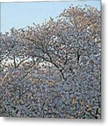 The Simple Elegance Of Cherry Blossom Trees Metal Print