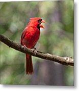 The Singing Cardinal Metal Print