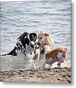Three Dogs Playing On Beach Metal Print