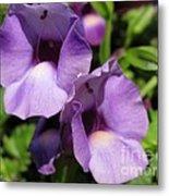 Torenia Named Purple Moon Metal Print