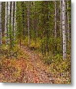 Trail In Golden Aspen Forest Metal Print