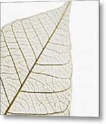 Transparent Leaf Metal Print